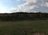 Front left vineyard