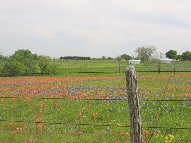 Brenham Wildflowers