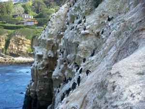 Cormorants on Cliff