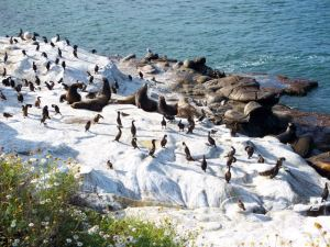 Cormorants on Rocks