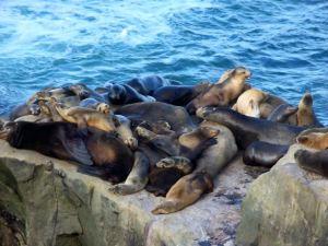 Seals Closeuo