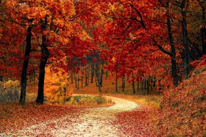 Michele McLaughlin: Music for Fall(Playlist)